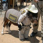 10 Adorable Animals Trying So Hard To Be Cops