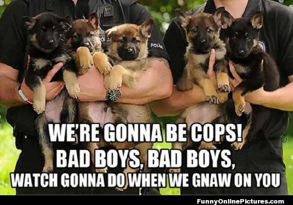Future K9s Of Law Enforcement
