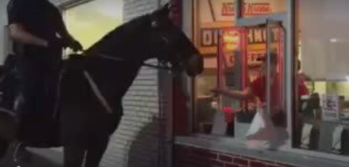Tampa Police Department's horse Chad has a taste for sweets. Source: Tampa Police
